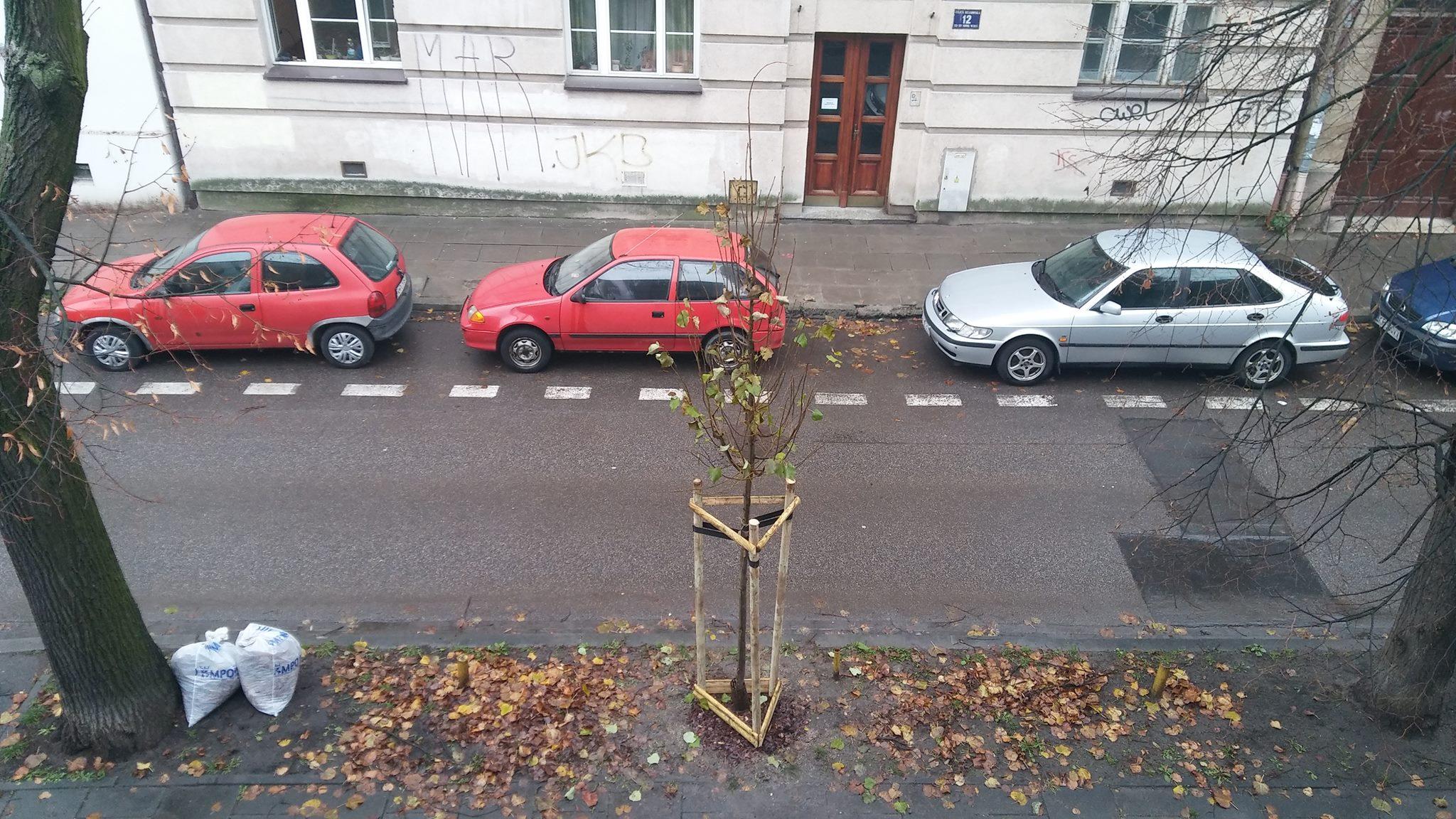 młode drzewo na trawniku przed moim domem